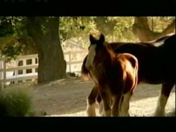 Superbowl Commercials Baby Clydesdale